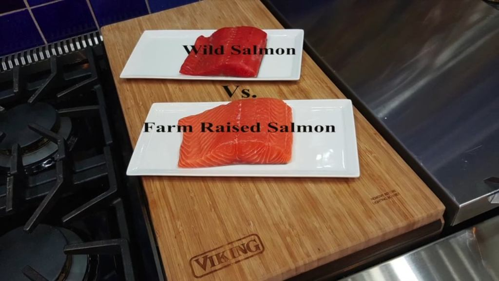 wild alaskan salmon vs farm raised salmon