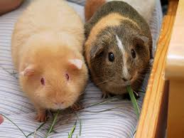 best pets to bond with