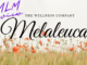 what is melaleuca about